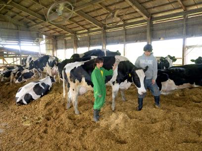 牛の健康を考え、牛舎の中でもつなぎ飼いはしないスタイル。今では乳牛の品評会で優等賞を受賞するまでに。